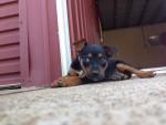 Romeo 4