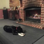 Sox by the fire